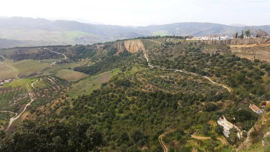 Ronda Spain Images of Olive Trees Fields