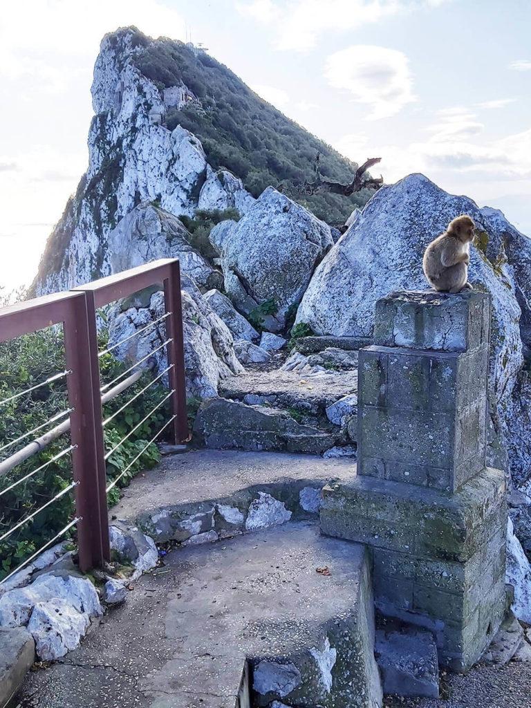 The Rock of Gibrlatar - monkeys
