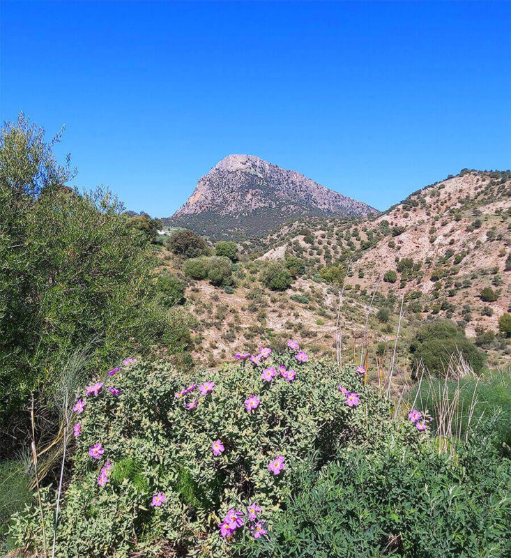 Andalusian nature in Grazalema