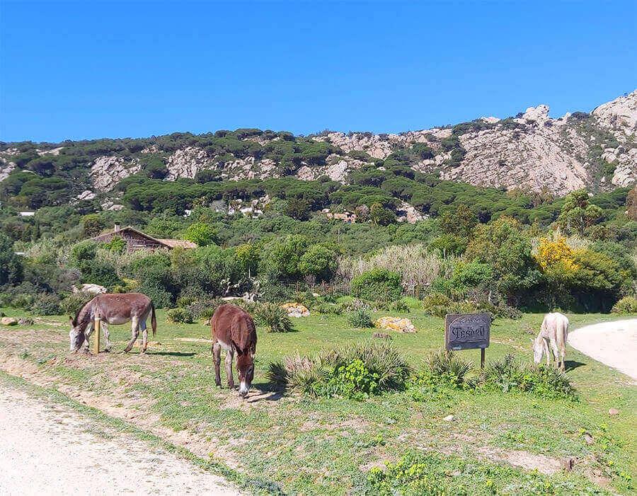 Countryside of Tarifa, Andalusia