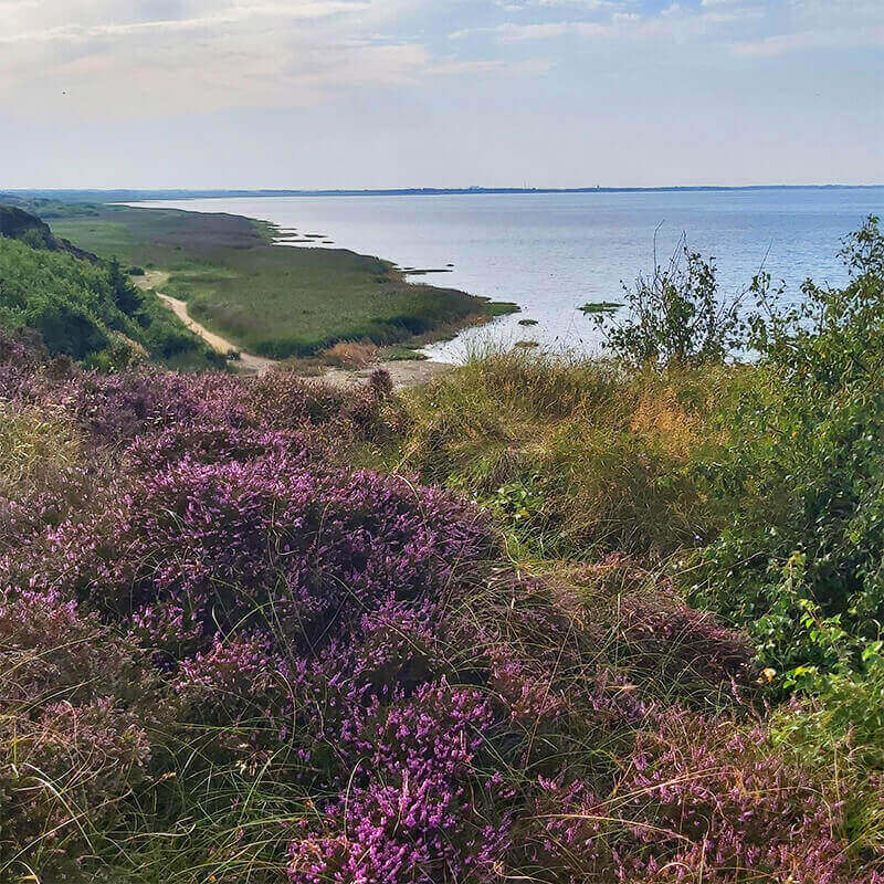 Gorgeous nature in Sylt - Morsum cliff