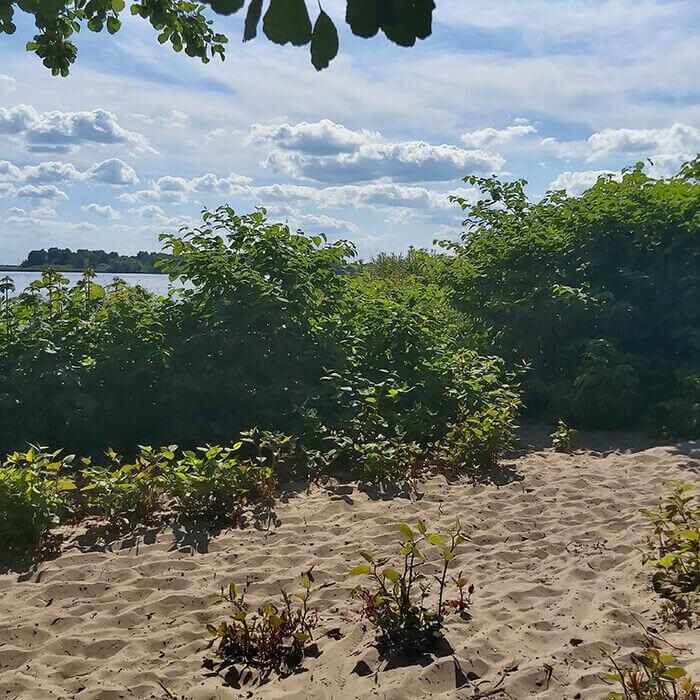 Beach Blankenese Hamburg