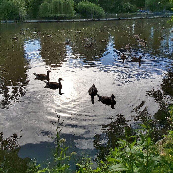 Nature Eppendorf
