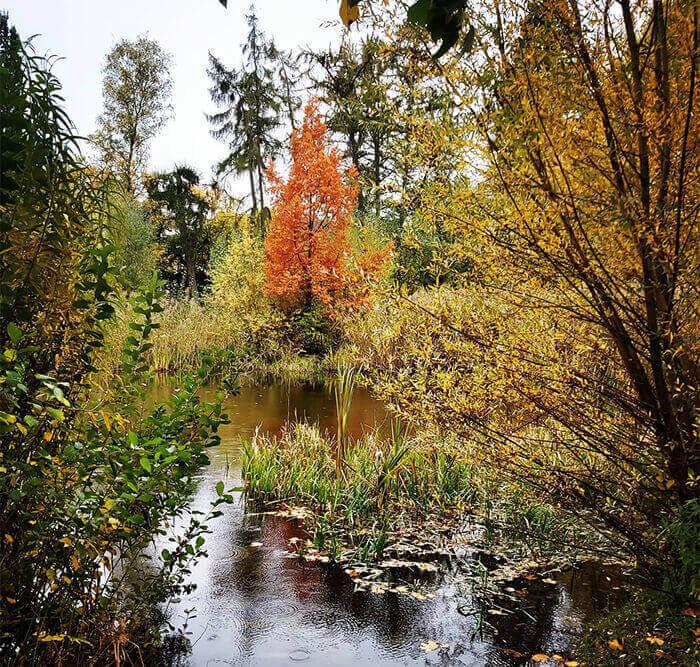 Nature in Hamburg